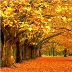 Mcintyres Tree Service, LLC Cover Photo