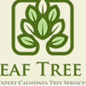 Big Leaf Tree Care Cover Photo