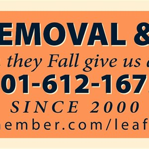 Leaf Removal & More Cover Photo