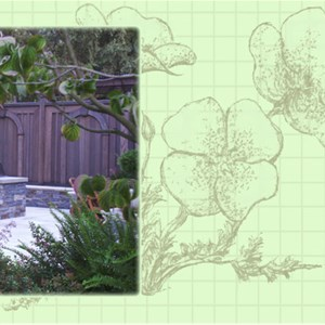 M Rosenberg Landscape Architecture Cover Photo