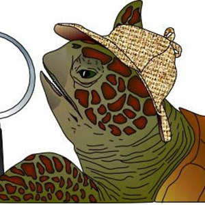Terrapin Inspection Cover Photo