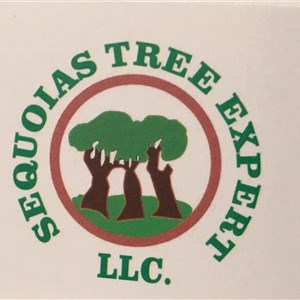 Sequoias Tree Expert LLC Logo