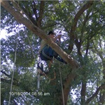 C.i.r Tree Service Cover Photo