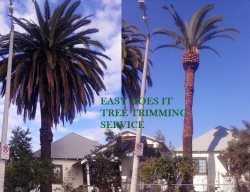 Easy Does It Tree Trimming Svc Logo