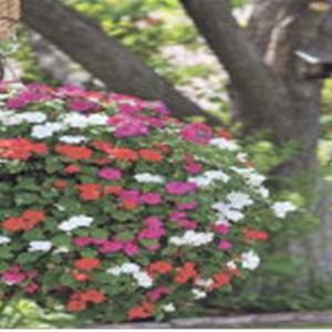 Gardeningcrew Cover Photo