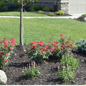 E Better Choice Landscaping LLC Logo