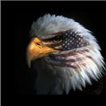 Eagle Improvements Cover Photo