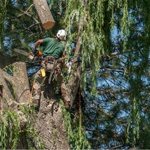 Tree Relocation Cost