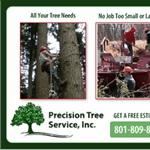 Tree Felling Cost