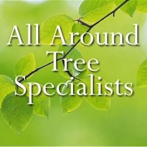 All Around Tree Specialists Logo