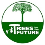 Pine Tree Prices