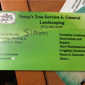 Tree Stump Removal Cost