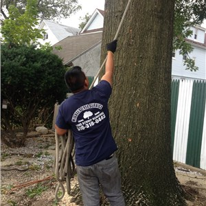 Miguels Tree Service Cover Photo