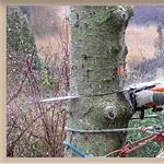 tree service Cover Photo