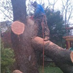 Hoppers Pro Tree Care Cover Photo