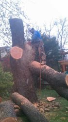 Hoppers Pro Tree Care Logo