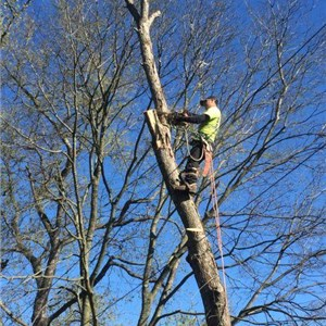 Mbi Tree Service Cover Photo