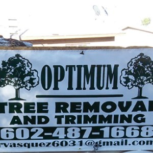 Large Tree Removal Cost