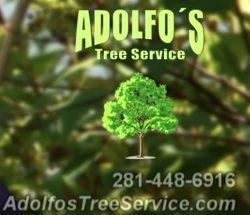 Adolfos Tree Service (281-772-8414) Logo