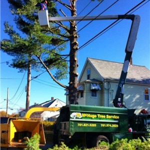 Mchugo Tree Service Cover Photo