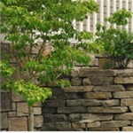 Landscaping Contractors Cover Photo