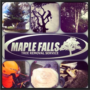 Maple Falls Cover Photo