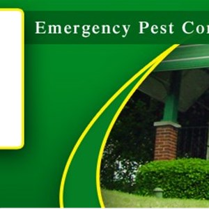 Serious Pest Solutions LLC Cover Photo