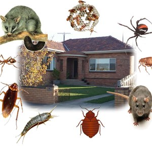 # Pest Control Cover Photo