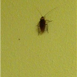 Bed bug Pest Control Cost