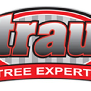 straub tree experts Cover Photo