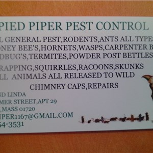 Pied Piper Pest Control Logo