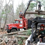 3b Firewood & Tree Removal Cover Photo
