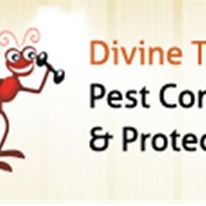 Divine Team Inc., Pest Mgnt and Termite Protection Logo