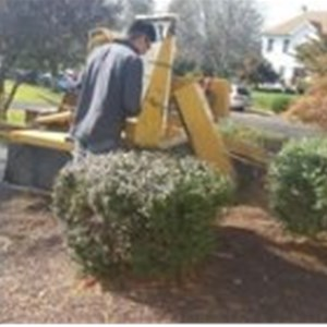 EDDS TREE SERVICE, INC Logo