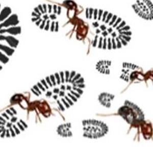 KC Pest Control Logo