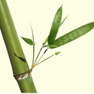Conserv-a-tree Cover Photo