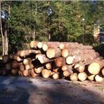 Mandellas Tree Service Cover Photo