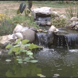 Waterwerks Gardening & Design Cover Photo