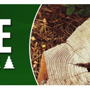 Ashe Tree Service Cover Photo