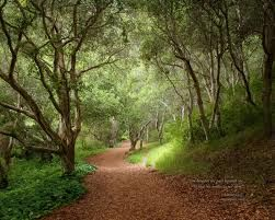 Are You Able to Choose Your Own Path in Life?
