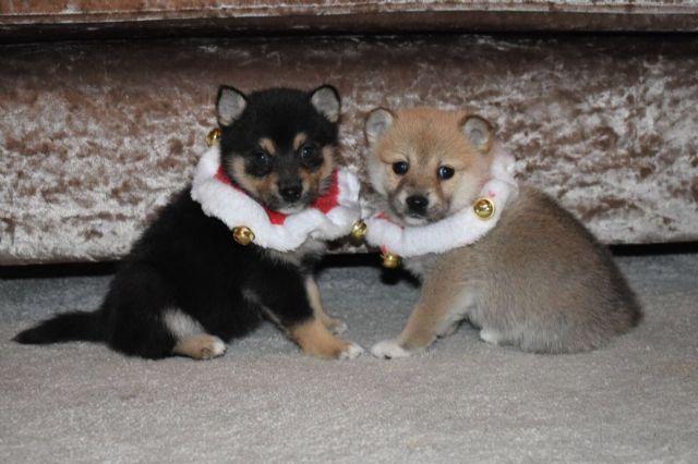 Free puppies medford oregon