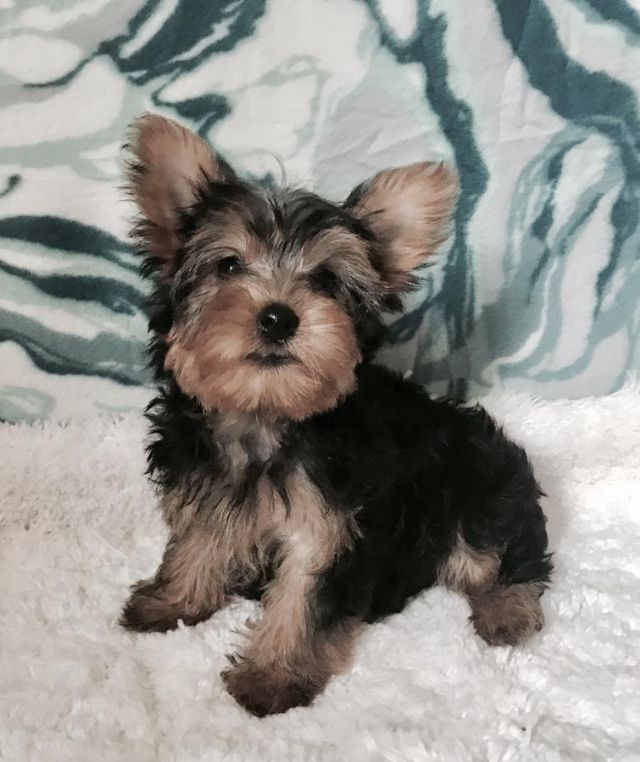 Pets For Sale Corpus Christi Texas For Sale Listings Free