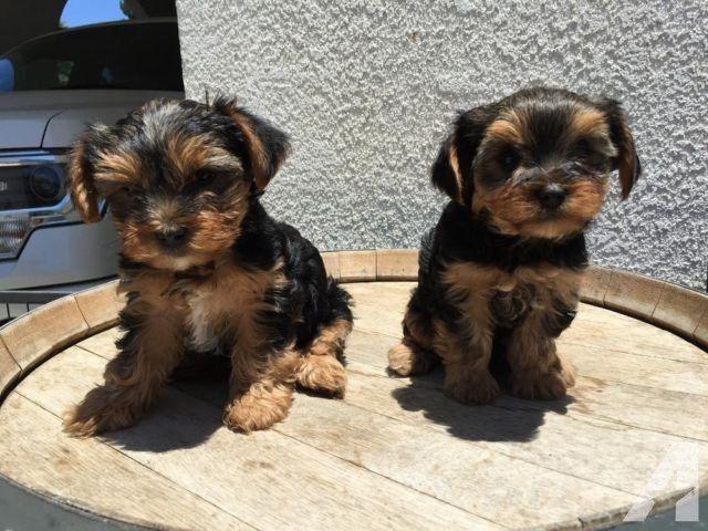 Free puppies in topeka kansas