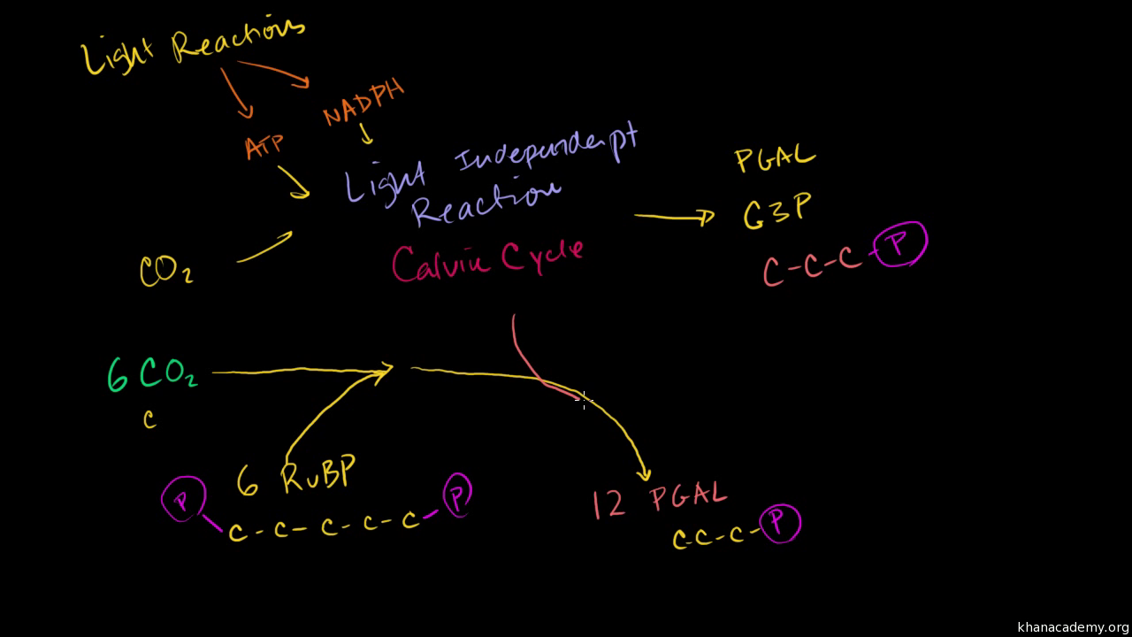 chemosynthesis of sugar equation Assessment of understanding the differences between photosynthesis and chemosynthesis.