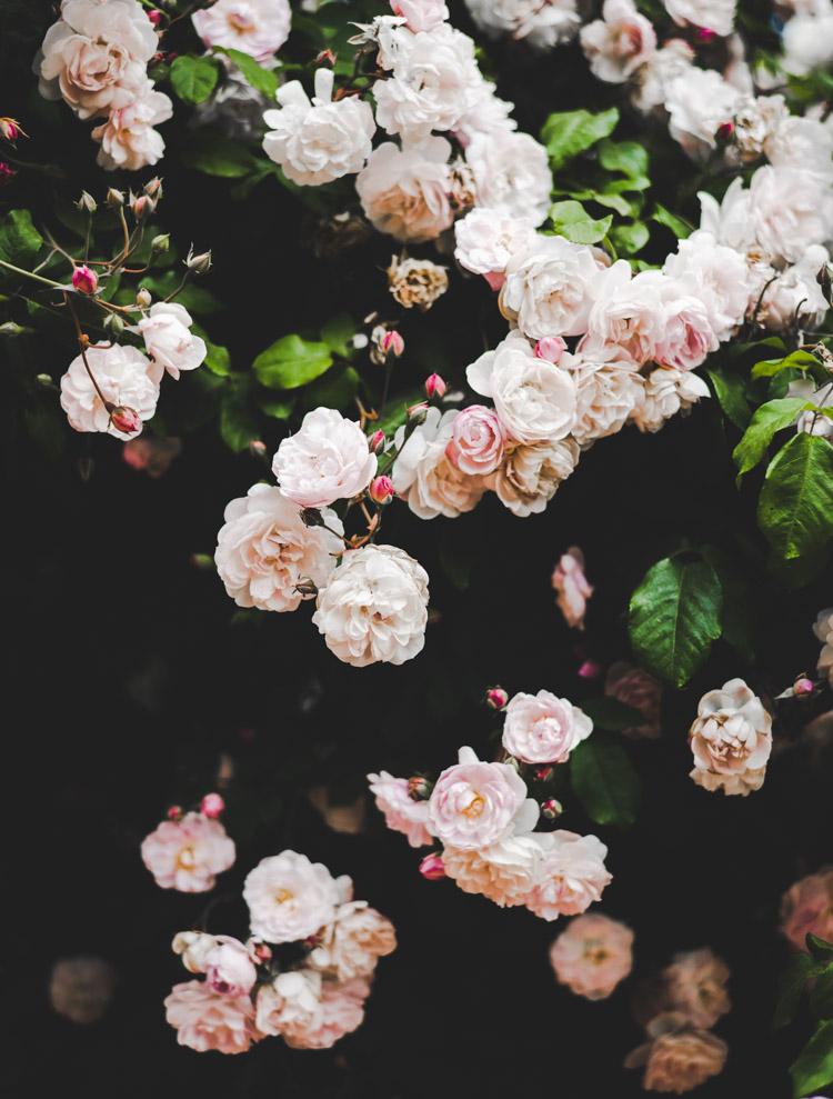 Paris Jardin des Plantes Rose Garden