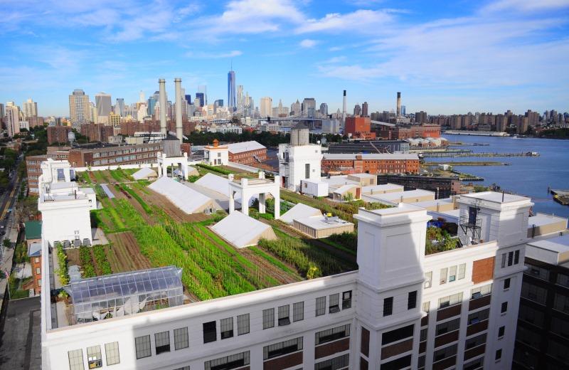 A maior horta urbana ja construida topo predio