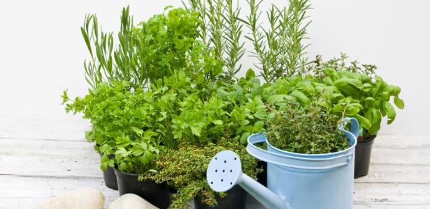 Horta em vasos horta em casa