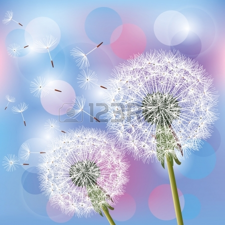 13131552 flowers dandelions on light blue  pink background vector illustration place for text