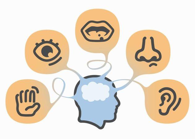 A educação dos sentidos | João Mendes