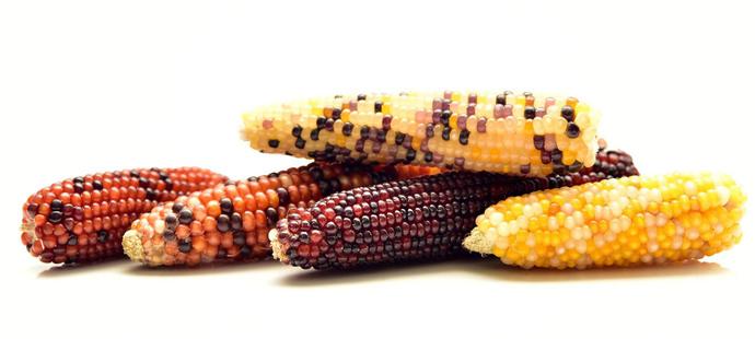 Gs ago corn 3740970 1920